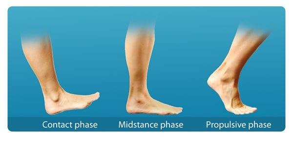 Phases of Gait